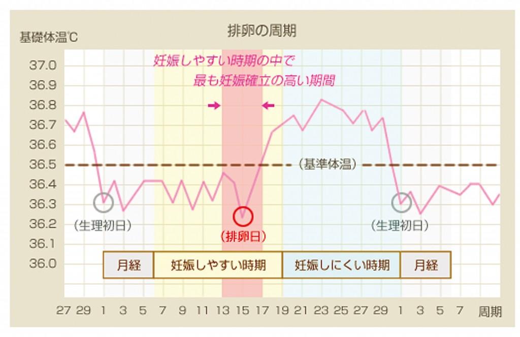 排卵周期図