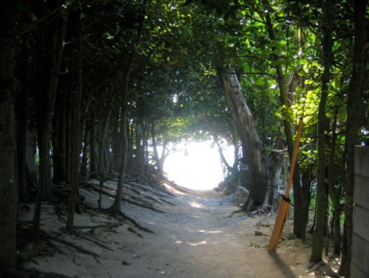 写真4/フクギ並木のトンネルから浜辺へつながる小道