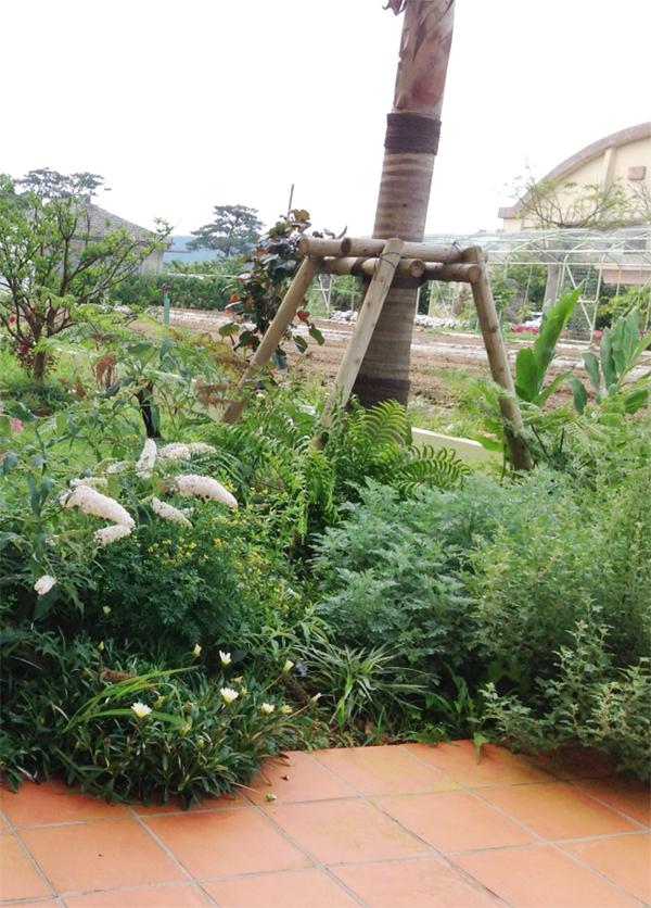 堆肥を大量に投入したガーデン。八重山ヤシやヘゴ、台湾モクゲンジ、ブッドレア、スファラルシアなど、多彩な植物を植えた(今帰仁村・あいあいファーム・涌川小学校跡地)