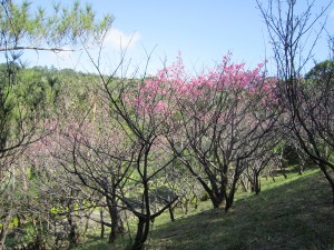 写真6/公園内に幾つかある桜並木。ピクニックや撮影スポットになっている