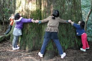 幹周り8mを越える杉の木。巨木に限らず、小さな木にも木霊が宿る