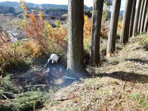 壁木とは、森の外周にあって中の森を守る働きがある(撮影協力:綾町・照葉林業)