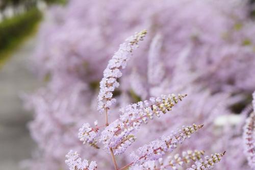 淡い紫色が可愛らしい。