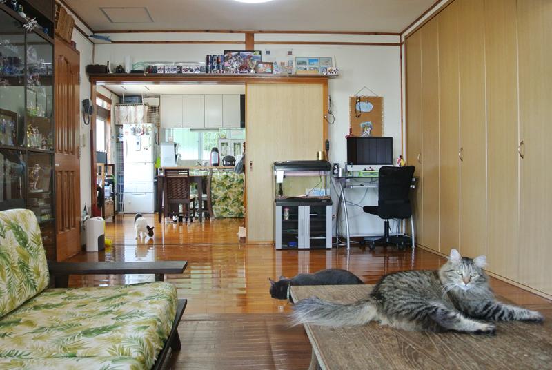 愛猫が伸び伸びと過ごす瀧川さん宅のリビング。奥はダイニング・キッチン
