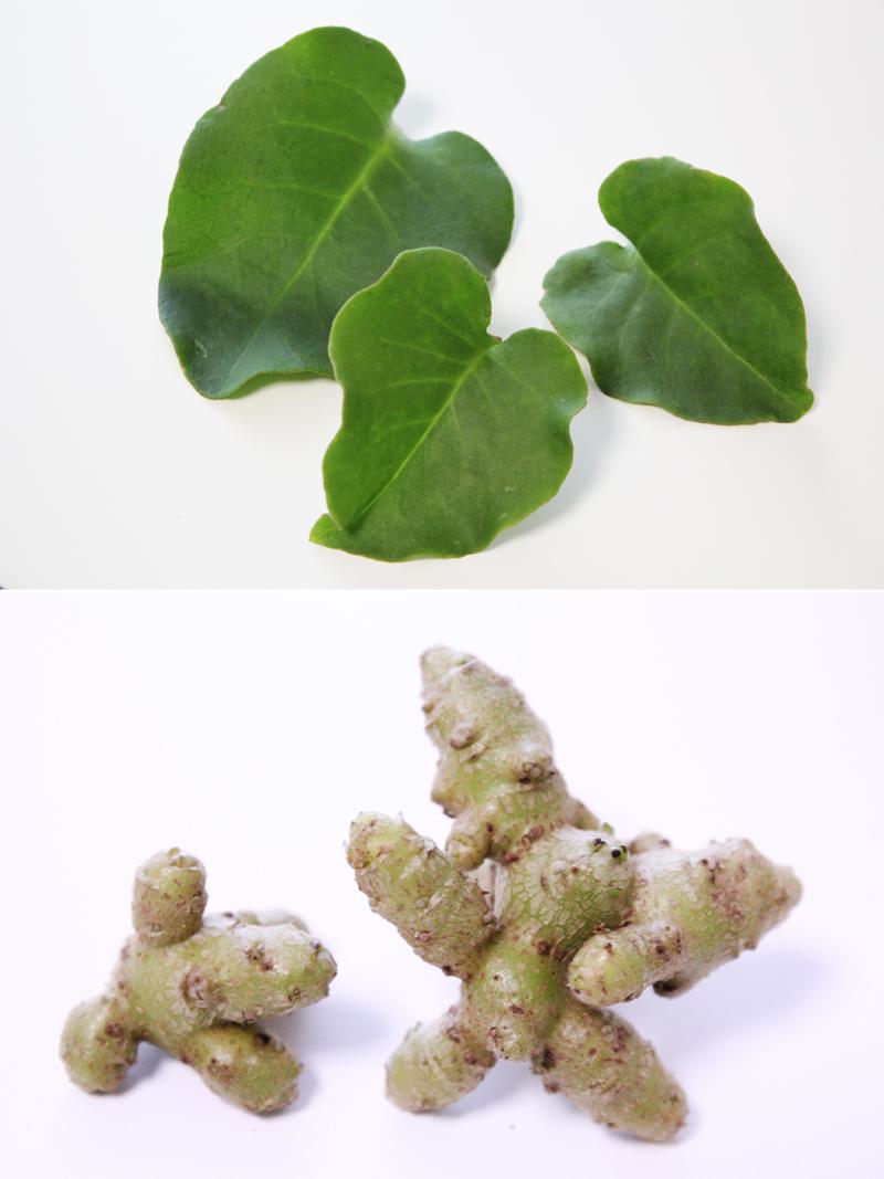 ツルムラサキ科アカザカズラ属に分類される、つる性植物の長生百薬。葉(上写真)はもちろん、つるに実るムカゴも食用に。