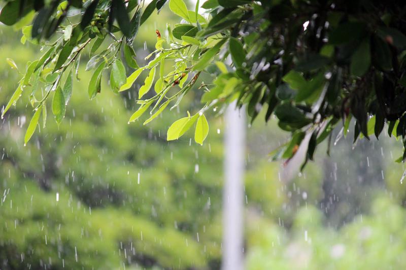 突然の大粒の雨。