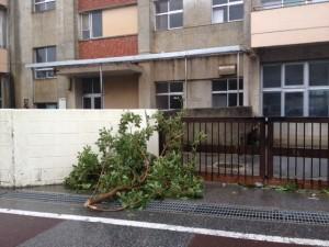 小学校の門に引っかかった台風で飛ばされた木=宜野湾市2012年