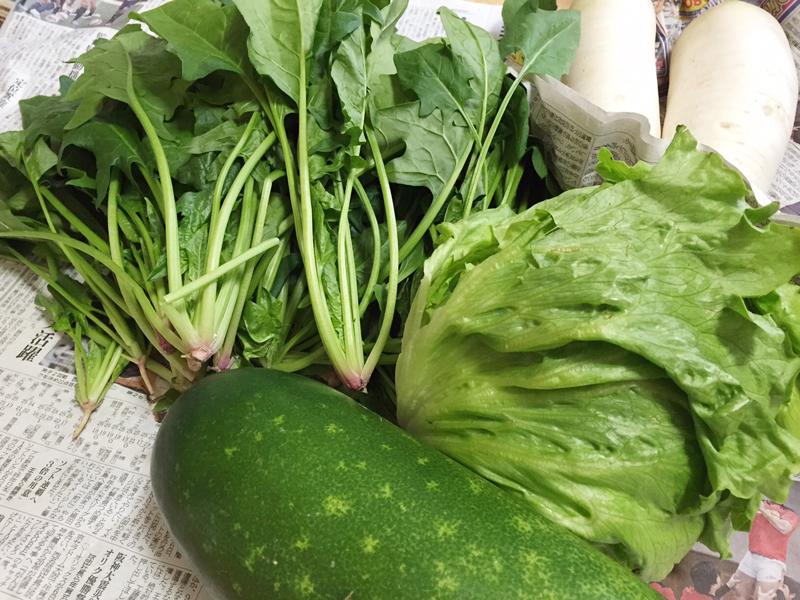 新鮮な沖縄野菜1