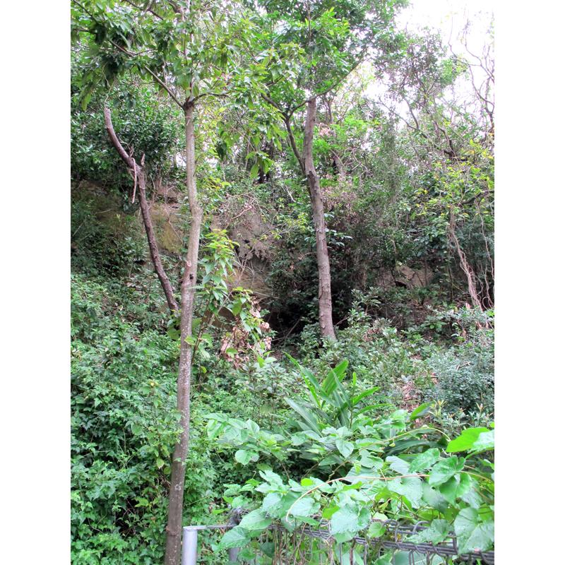 <6>鬱蒼と木が生い茂るガーナー森。都市の中にある貴重な緑。近くに来て見上げると、思った以上に標高が高い