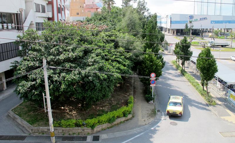 <3> 波上宮から見下ろした、辻・若狭緑地。ガジュマルを中心に木が鬱蒼と茂っている。おおむね緑地を境に左側が元々の陸地、右側が埋立地に分けられる