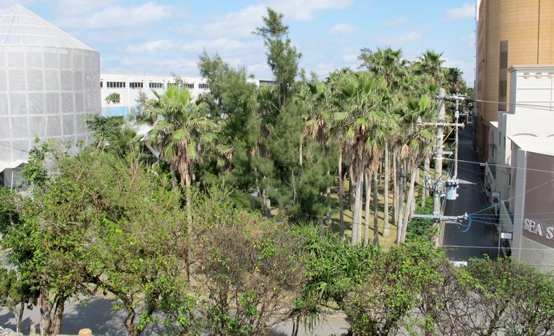 <6> 三文殊公園から見た辻・若狭緑地。街の中に木々が生い茂る光景を見ながら、この緑地の貴重さを感じる。もし緑地がなければもっと寒々とした街並みになっていたと感じる