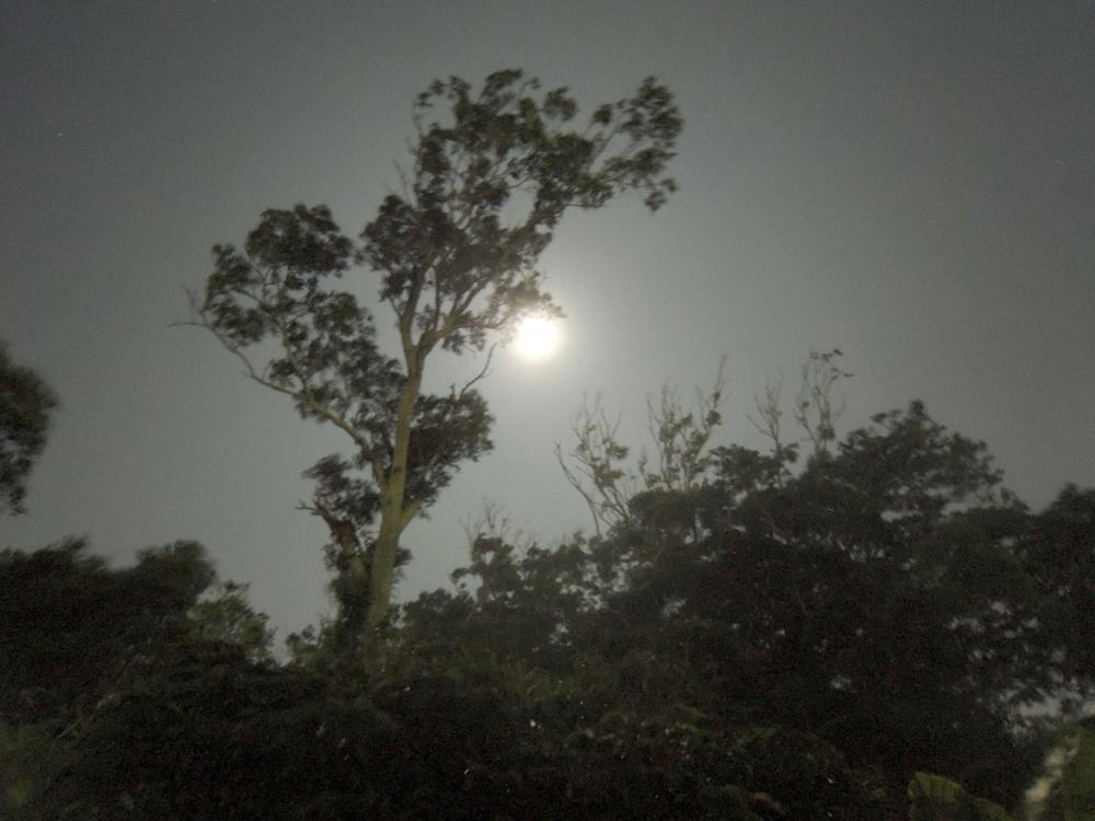 (写真/森と月)