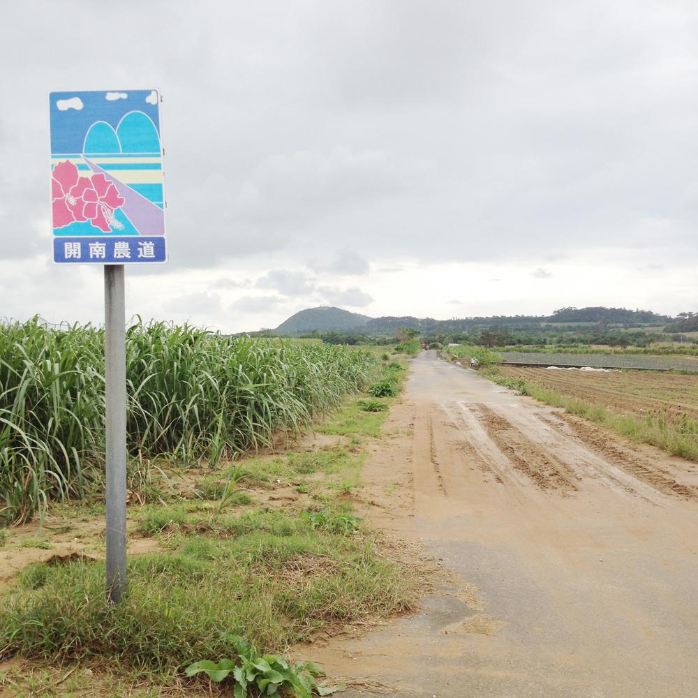 「開南農道」の看板と、サトウキビ畑の中を一直線に延びる道。周辺はこの道以外にも直線に延びる道路が存在し、広い農地と相まって、島の中とは思えない大陸的な景色が広がる