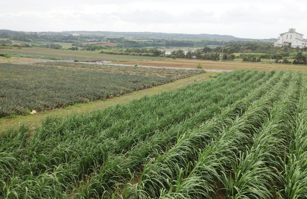 開南集落の南側から農地を見渡す。右手の建物はライスセンター。写真では畑が続くが、米づくりも盛んに行われている。左側は川原の集落で、こちらも開南の3年後に入植が始まった開拓集落