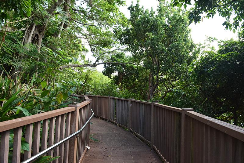 都心なのに公園が多い泊・上之屋。そのほとんどが拝所や文化財を保全するためのバッファーゾーン(緩衝帯)の役割を果たす。上之屋1丁目の「タカマサイ公園」は、土地区画整理事業と合わせて公園整備が行われ、ウッドデッキの散策路が設けられている。市民に親しまれる拝所となるよう工夫されている。